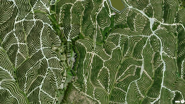 Vineyards - Huelva, Spain